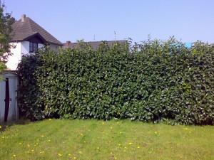 Tuinieren en groen tips